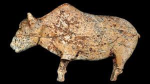 IAA_bison_2